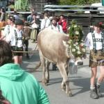 Kranzrind (Alpe Schönberg?) beim Obermaiselsteiner Viehscheid 2010