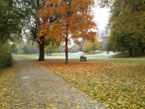 First Snow in Cottbus, 27.10.2012, Puschkin Park.