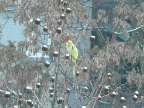 Gelber Vogel im Hof des Lg10
